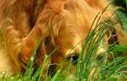 Les animaux sont également exposés au risque d'intoxication